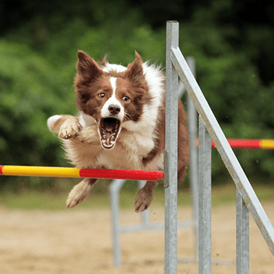 AVE-DOG-Kurs-AGILITY