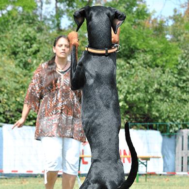 AVE-DOG-Kurs-TRIXXEN