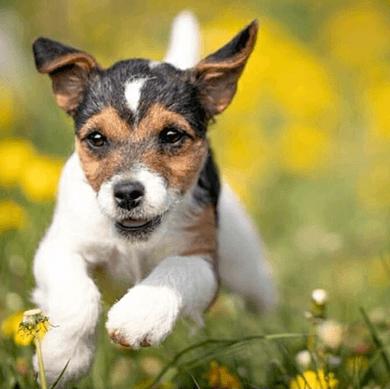 AVE-DOG-Kurs-WELPEN